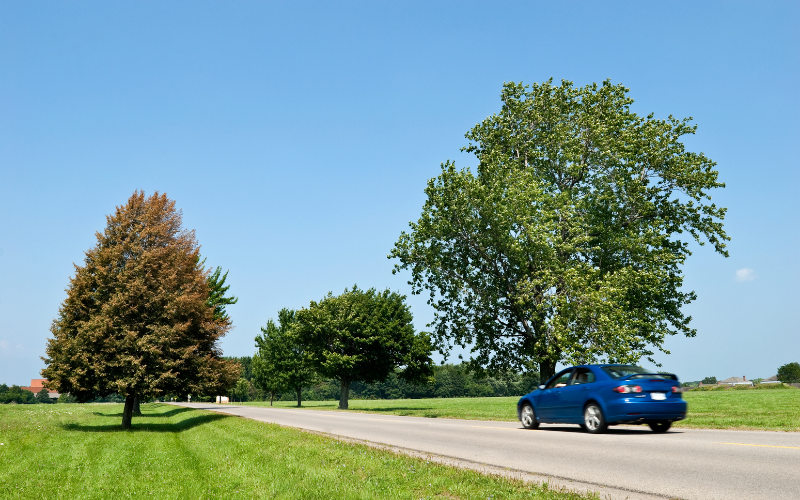 Car Maintenance Guide to Prepare for Your Cross-Country Trip